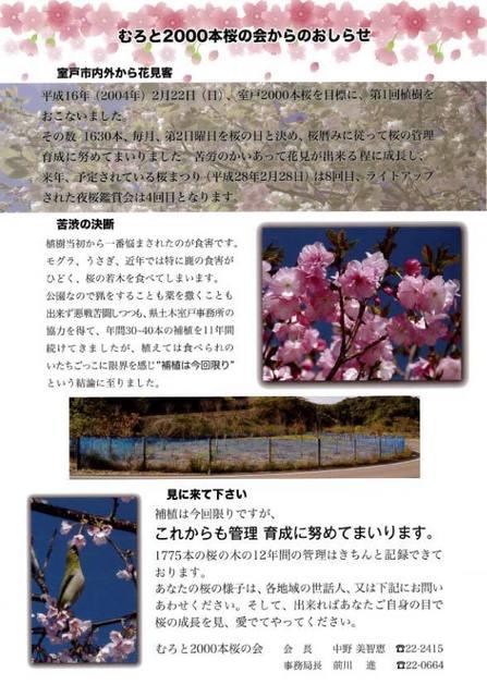 二千本桜お知らせ.jpg